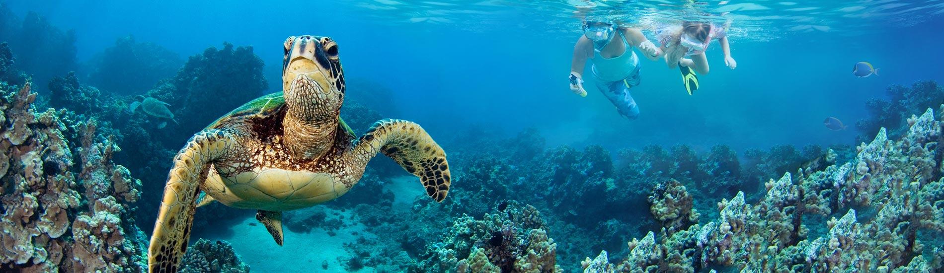 Galapagos 生態之旅