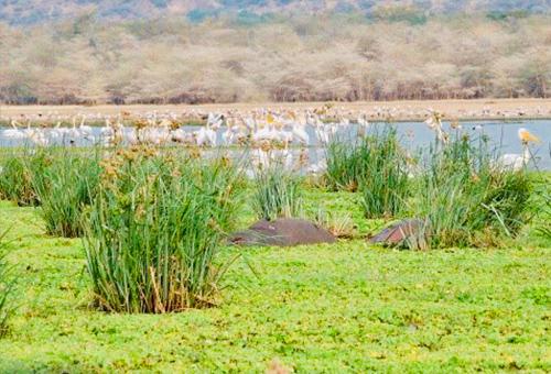 綠意盎然的曼雅拉湖