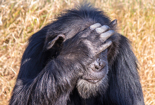 奧佩吉塔保護區 - 肯亞唯一觀察黑猩猩地點
