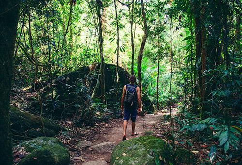 峽谷雨林漫步