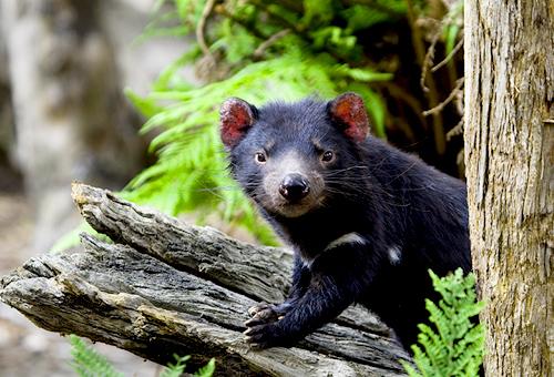 探索希斯維爾野生動物保護區