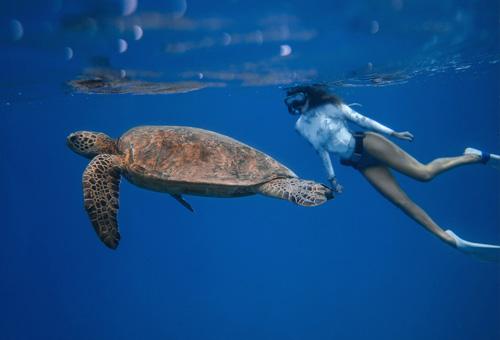 大海裡與海龜浮潛