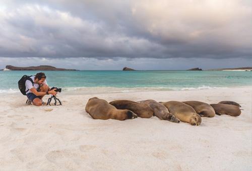 沙灘上睡很甜的海獅