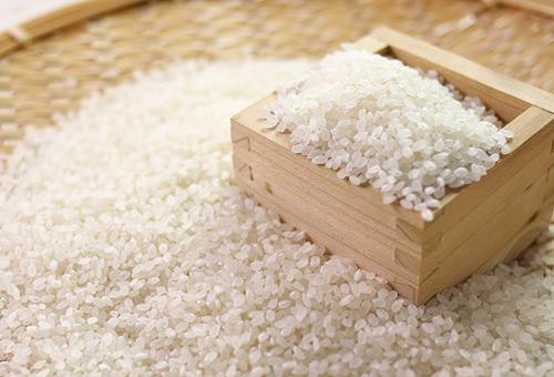 全世界最好吃的米:越光米