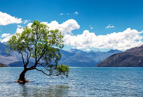 獨立在瓦納卡湖的一棵樹