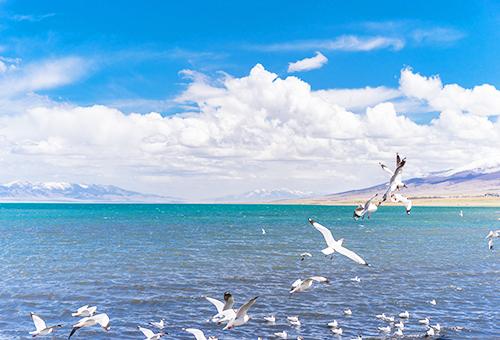 青海湖風光