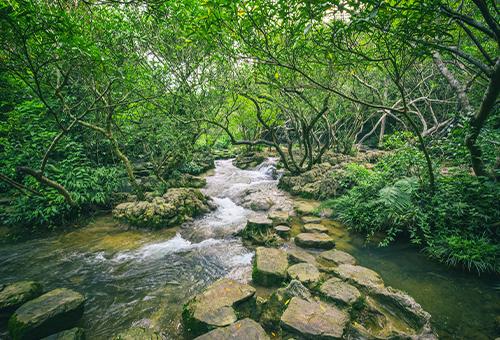 穿越奇石嶙峋的水上森林