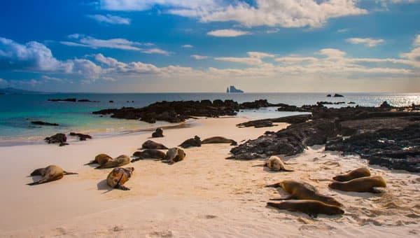 Ecuador 達爾文島 La Pinta Western Islands 7天6夜