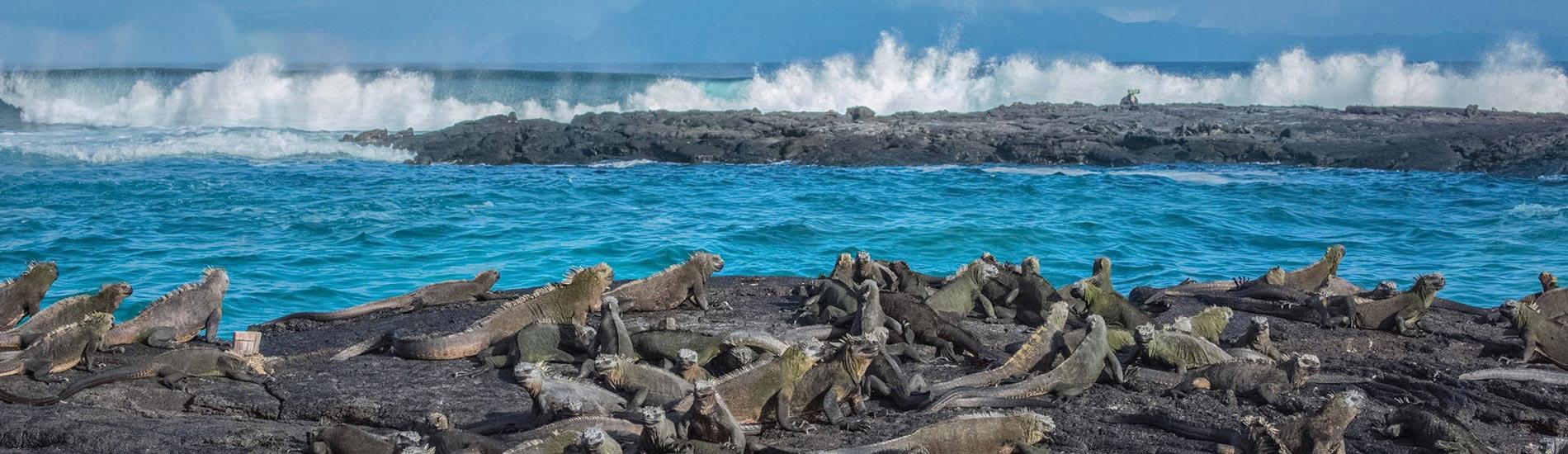 加拉巴哥群島 (Galapagos Islands)