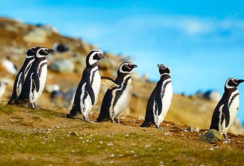 和麥哲倫企鵝近距離接觸