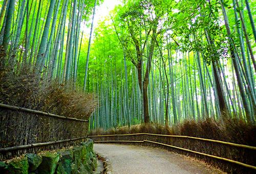 遊走竹林翠綠世界