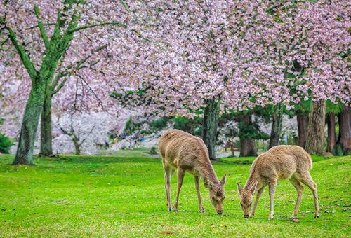 近距離接觸可愛小鹿