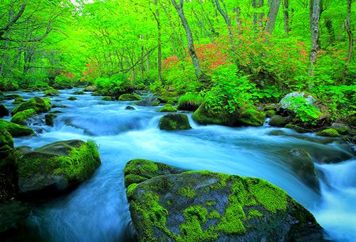 漫步於奧入瀨溪流間吸收芬多精
