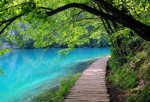 漫步於幽靜樹林的木棧道上
