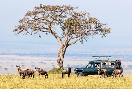 乘坐傳動吉普車的遊獵之旅