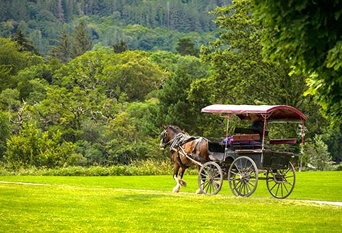 搭馬車悠遊基拉尼國家公園