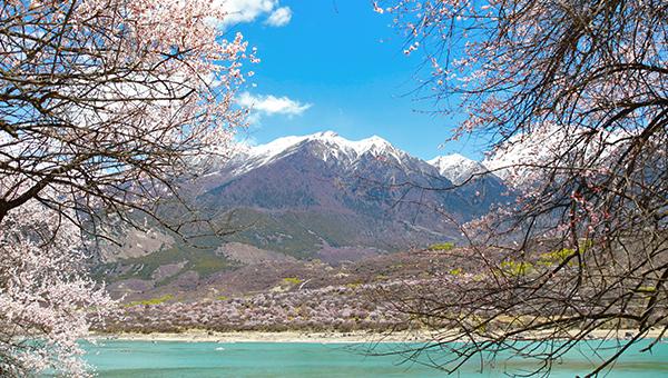 西藏林芝桃花季
