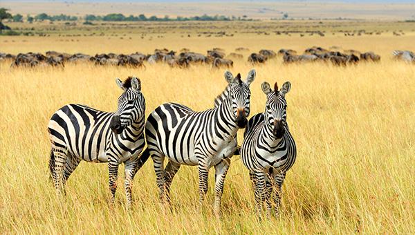 坦尚尼亞, 肯亞風情