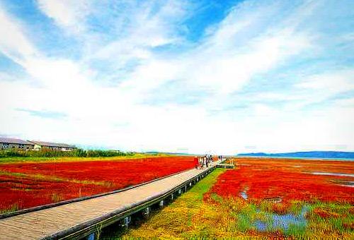 欣賞能取湖畔秋季限定的紅色珊瑚草