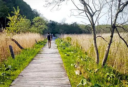 沿著溫根內木道遊覽釧路濕原生態