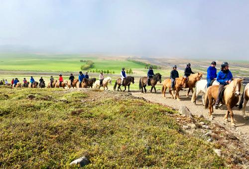 騎乘最純種的冰島馬